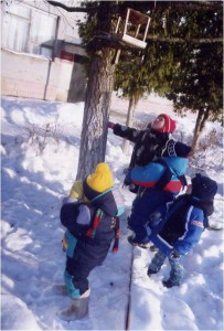 Экологическая деятельность дошкольников